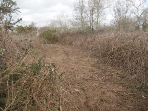Bramble Path