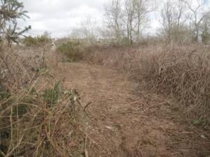 Bramble Path