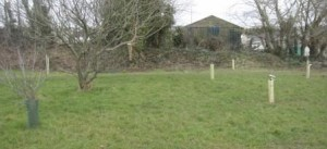 New Orchard2