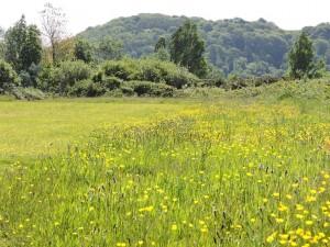 Meadow Edge
